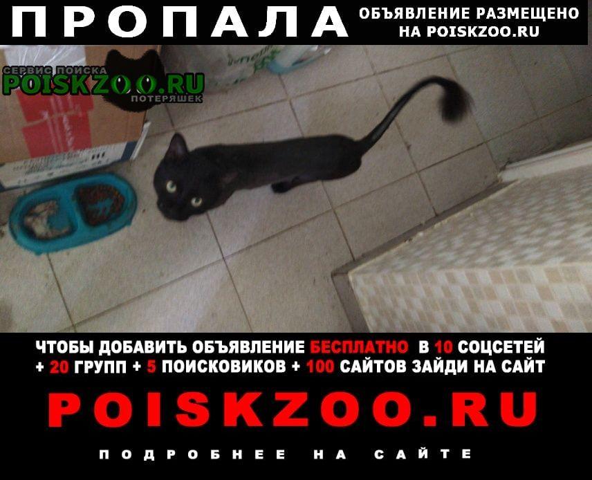 Пропала кошка зовут гарри Сочи