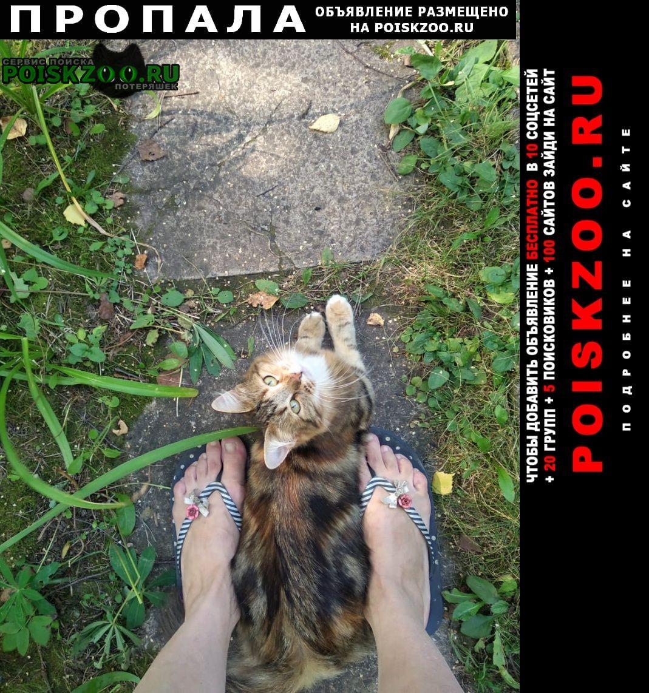 Пропала кошка Тучково