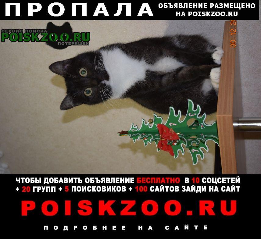Пропала кошка потерял Славгород