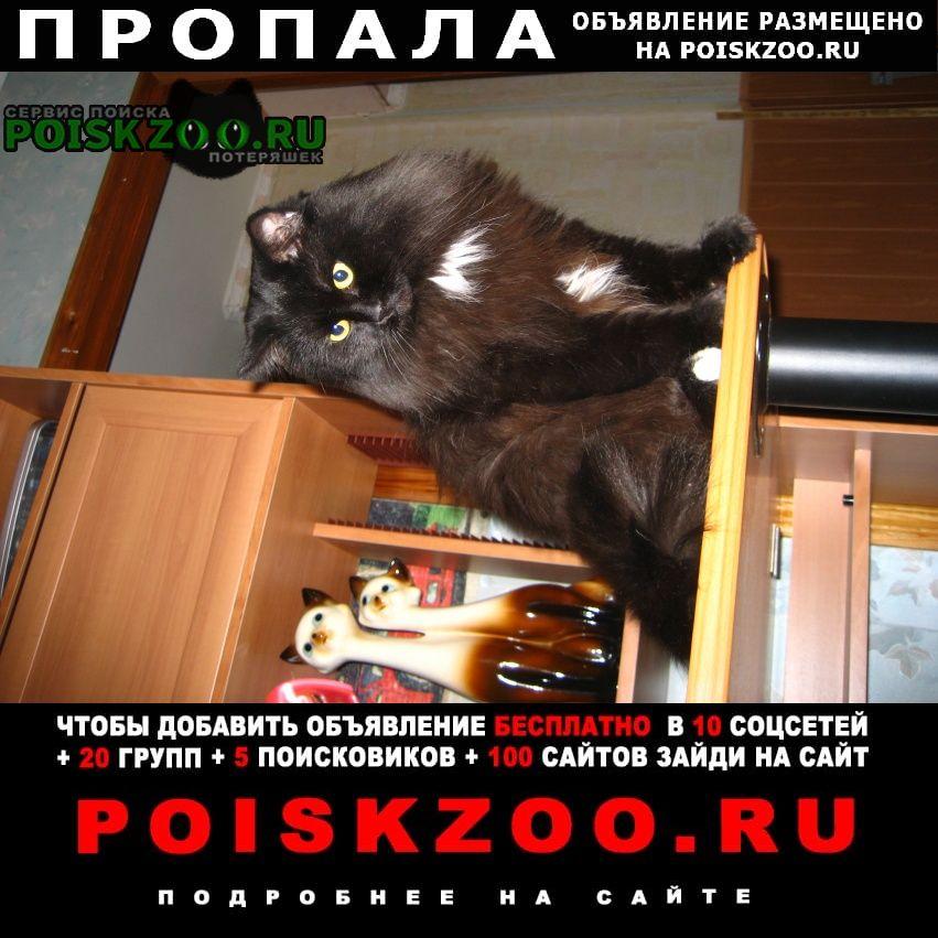 Москва Пропала кошка кот