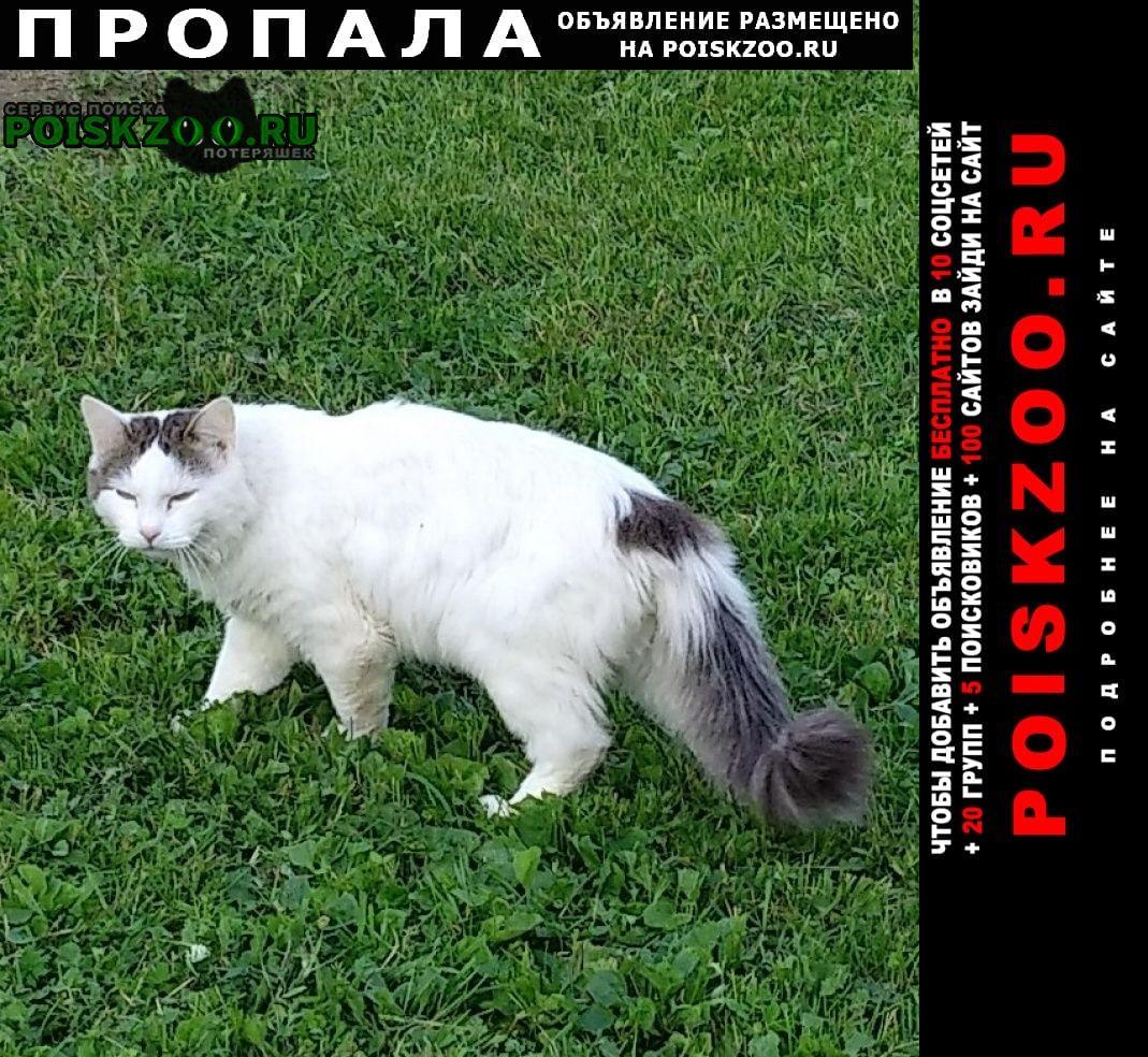 Александров Пропала кошка кот
