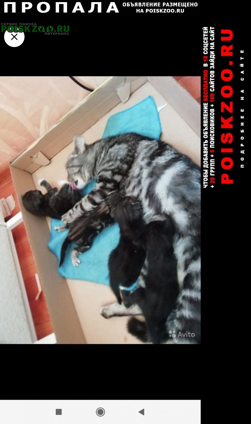 Казань Пропала кошка попала кошечка по кличке мия, серая мрам
