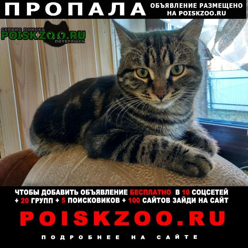 Солнечногорск Пропала кошка