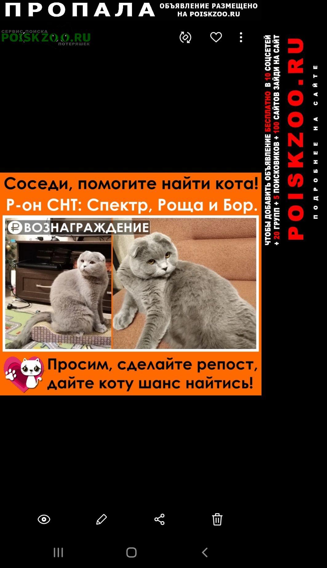 Воронеж Пропала кошка