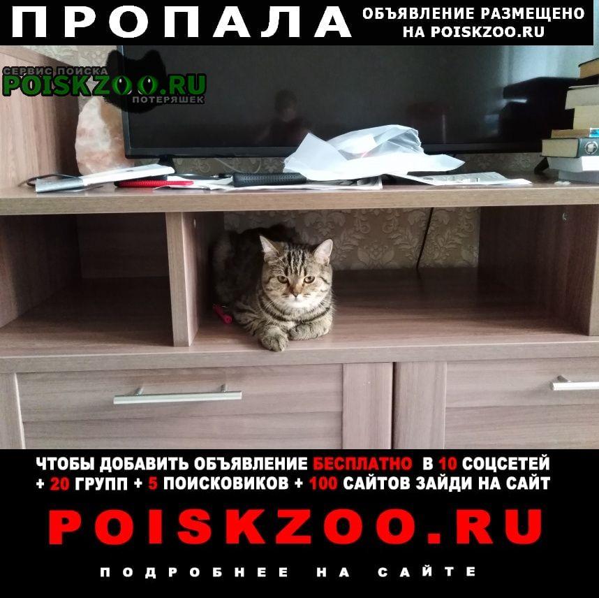 Пропала кошка в крекшино д. митькино, дск колос Кокошкино
