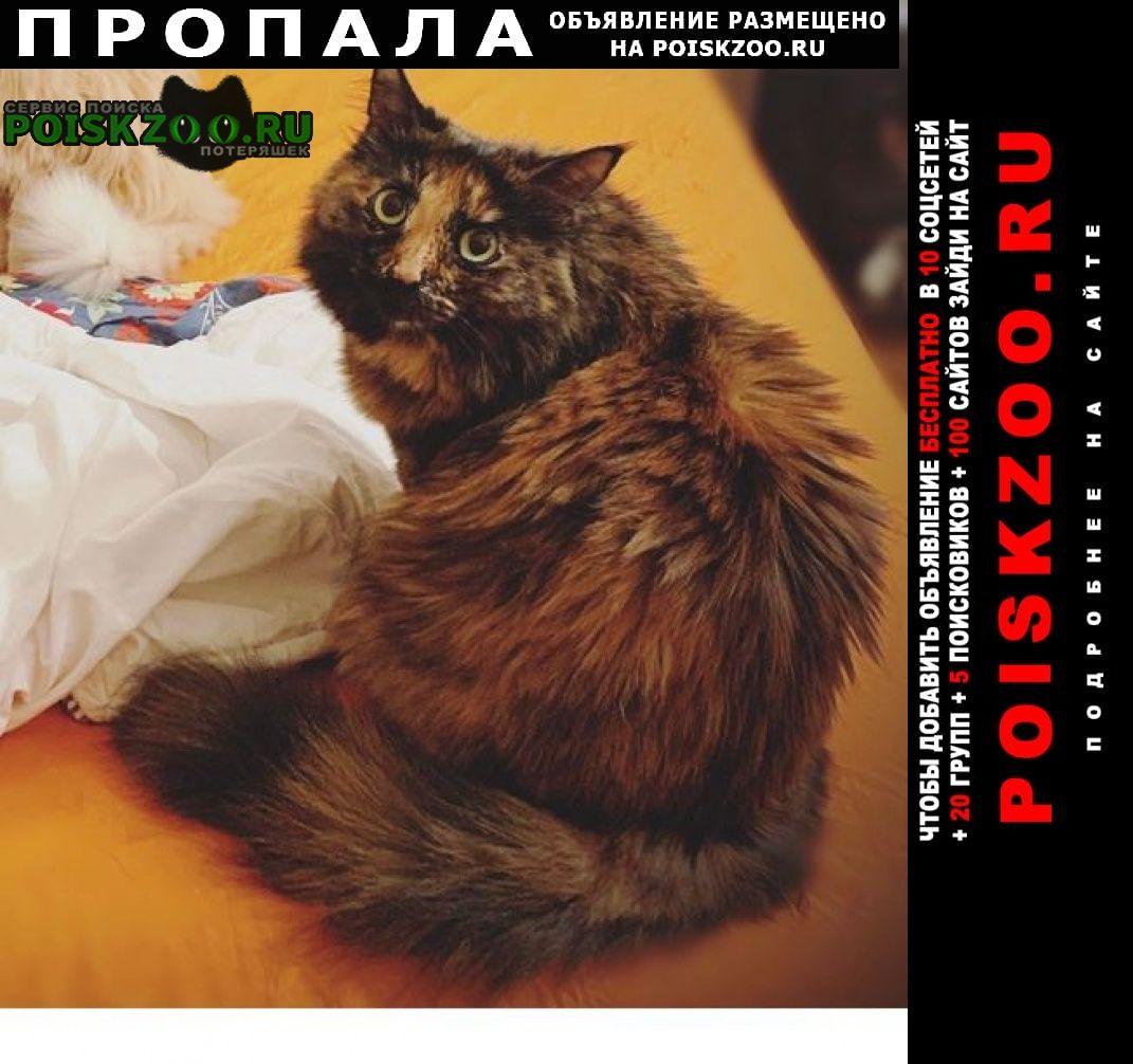 Пропала кошка буся Москва