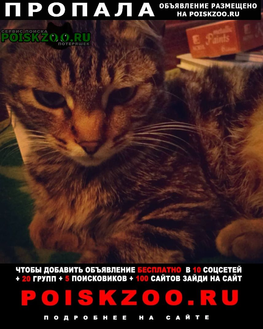 Пропала кошка кот в районе гор. больницы Новороссийск