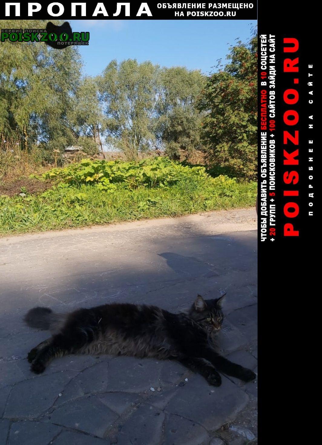 """Богородск Пропала кошка """"тигра плюшевая"""""""