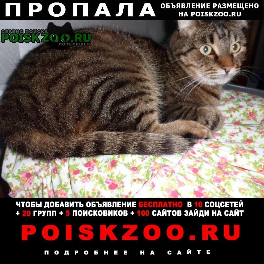 Пропала кошка домашний кастрированный кот (9 лет) Тула