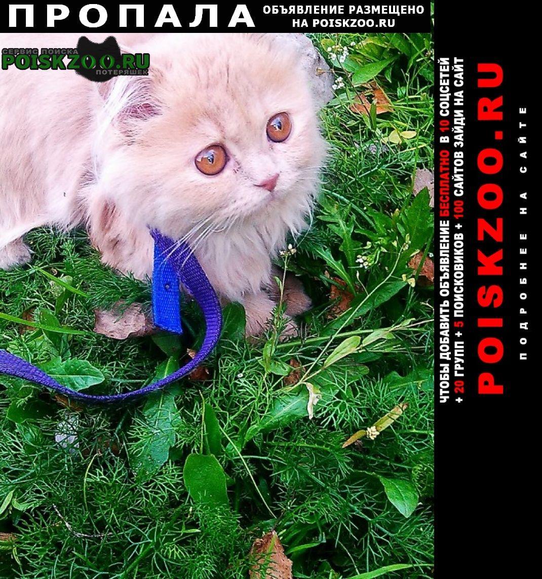 Пропала кошка Светлогорск Гомельская обл.