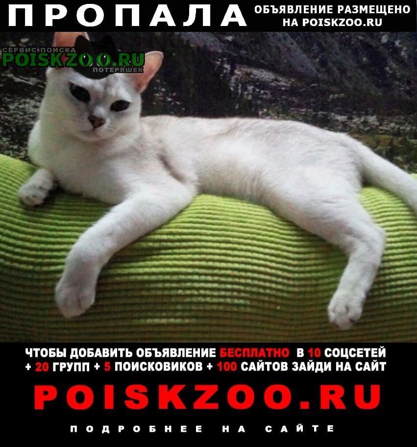 Пропала кошка кот породы бурмилла Старая Купавна