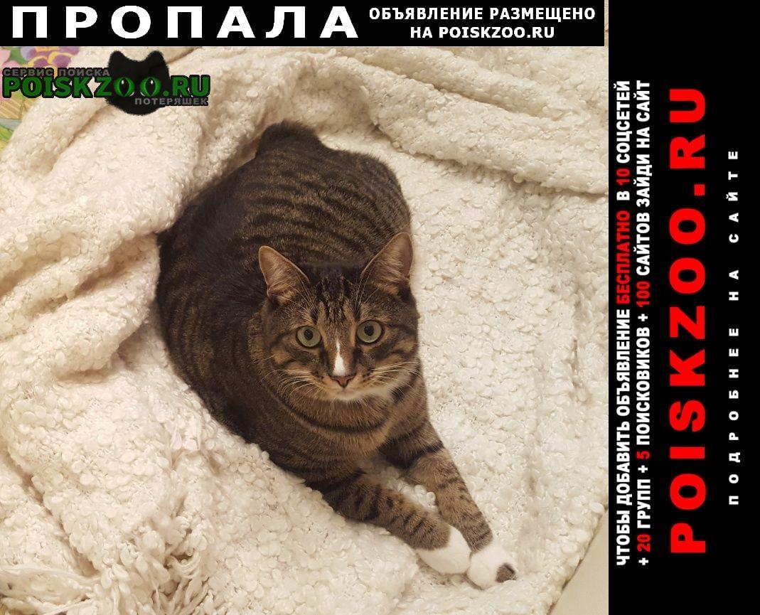 Пропала кошка ий район, д.пикино Солнечногорск