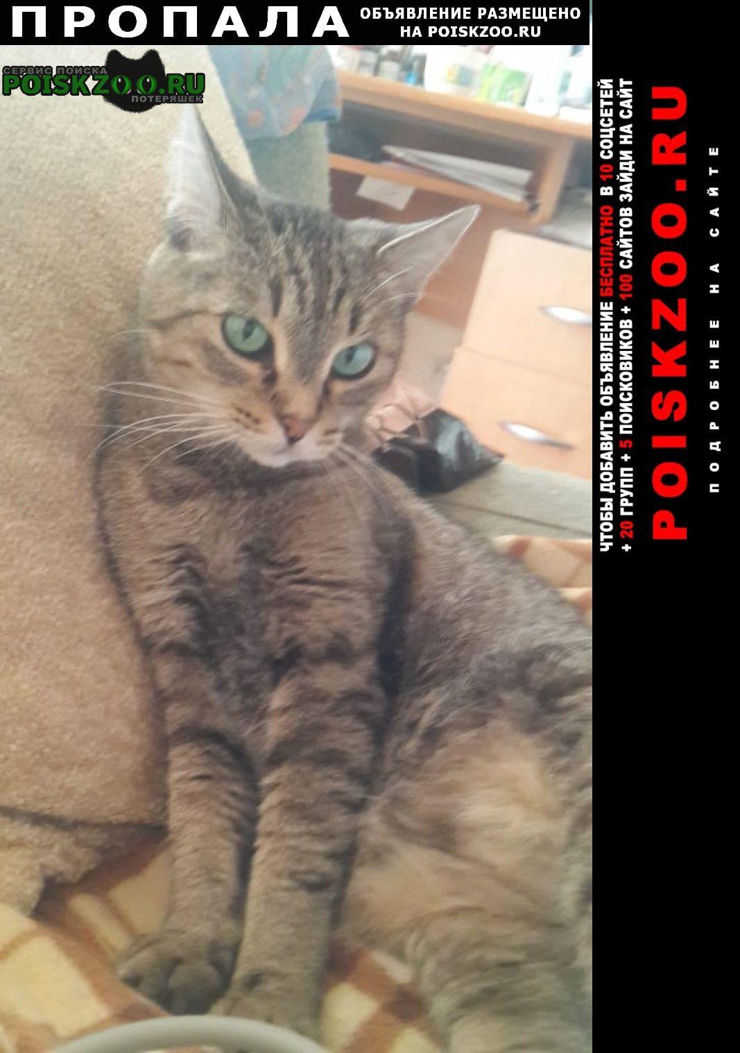 Пропала кошка по адресу . севастопольски Москва
