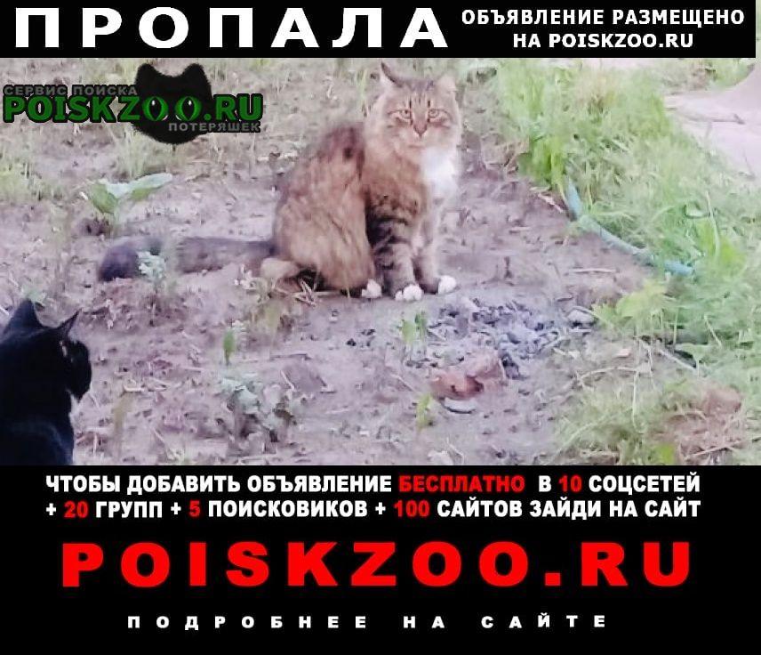 Пропала кошка тёплый стан Москва