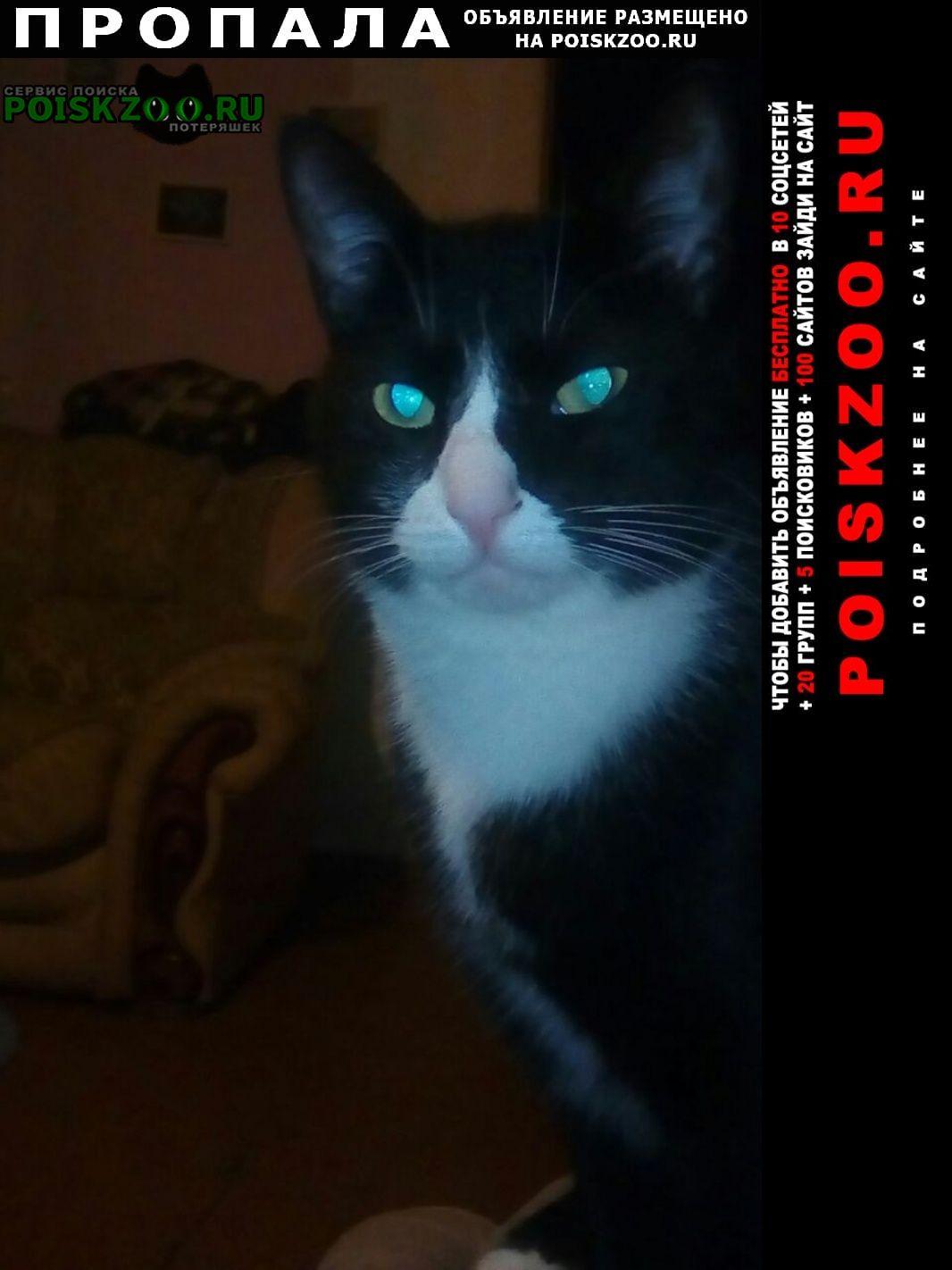 Пропала кошка кот Владикавказ