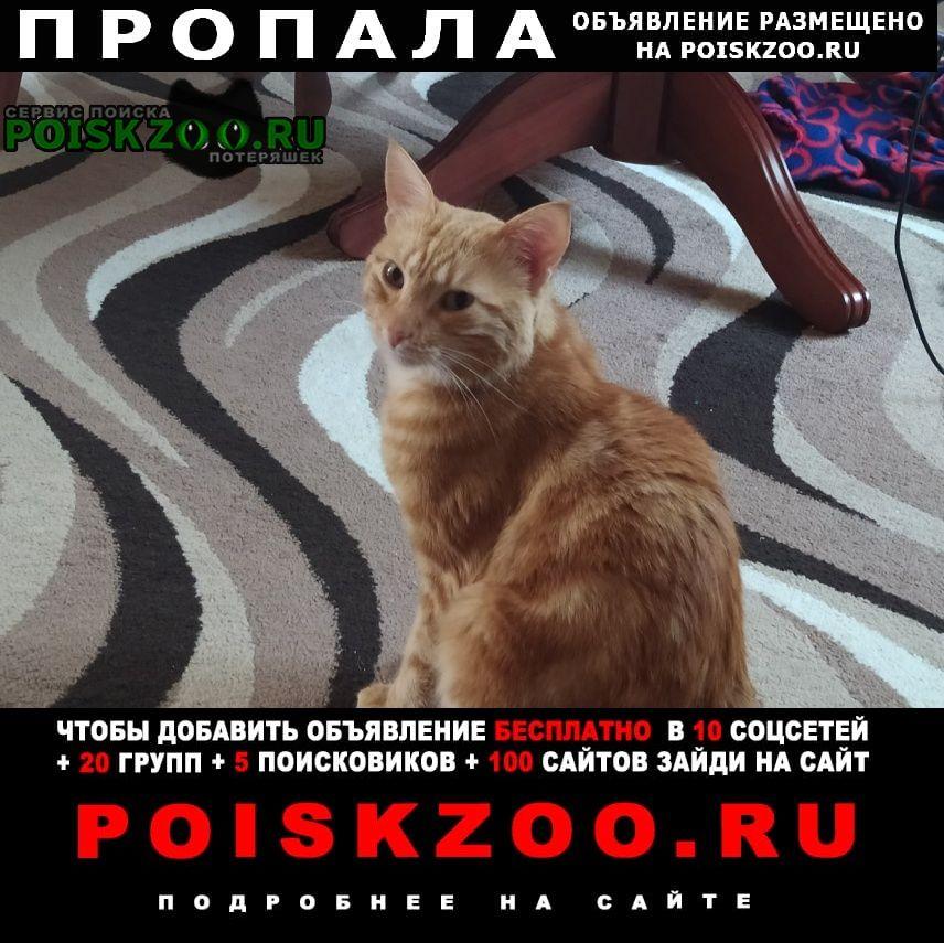 Пропала кошка рыжий кот Симферополь