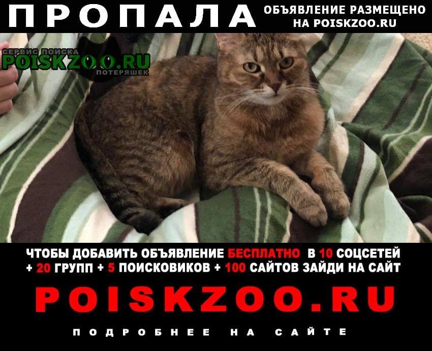 Пропала кошка снт «дружба» роговское поселение Чехов