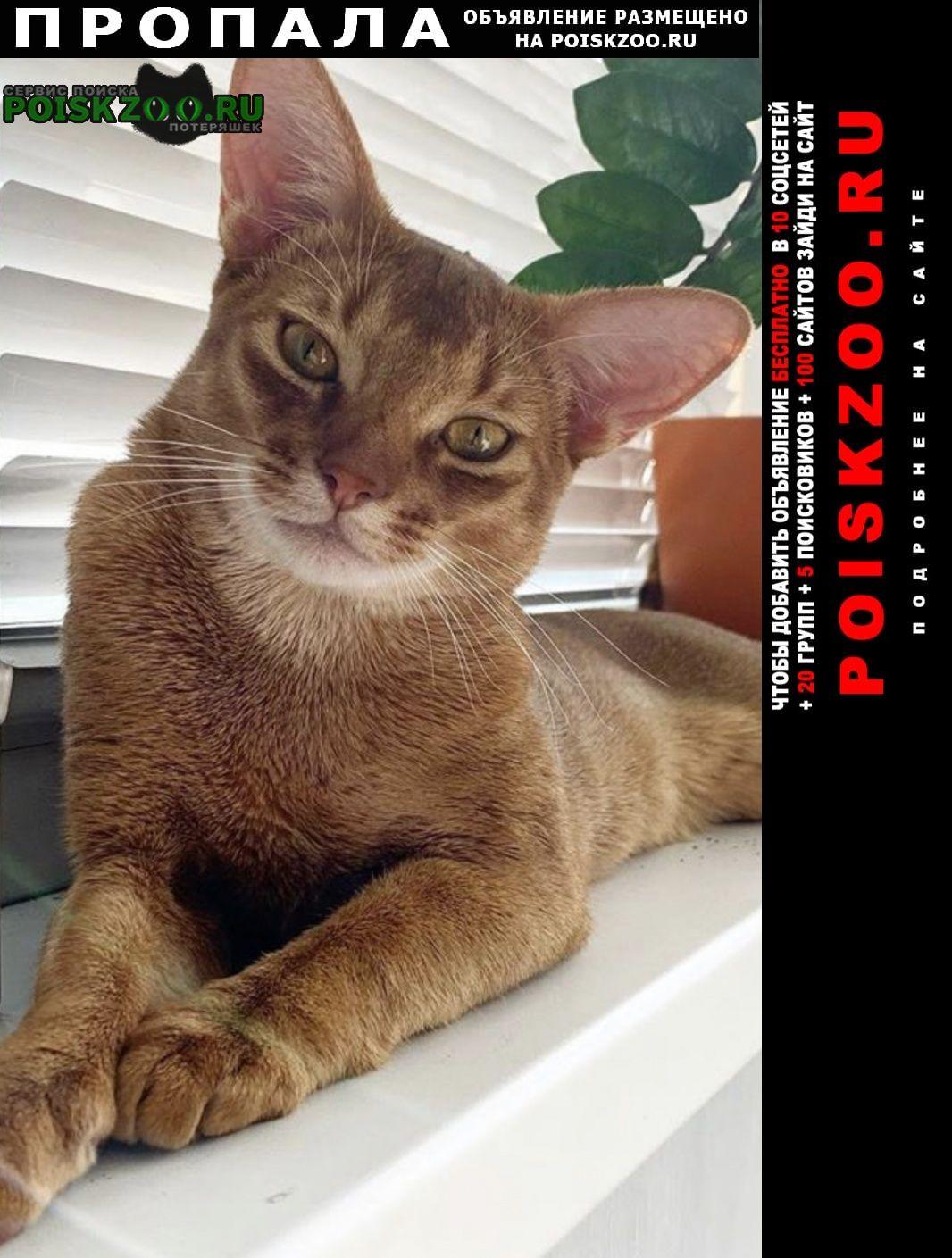 Пропала кошка кот днп дубровка, дмитровский рай Москва