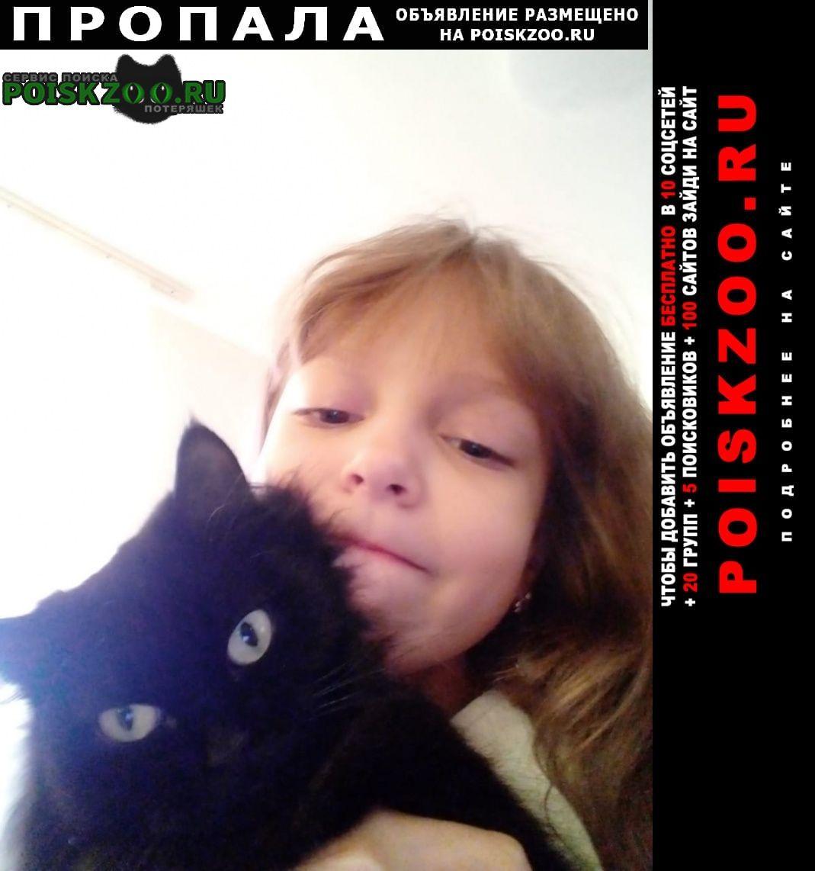 Пропала кошка Пышма