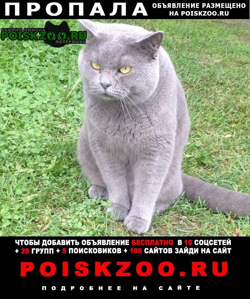 Пропала кошка британец. черчилль. сломан кончик хвоста Киржач