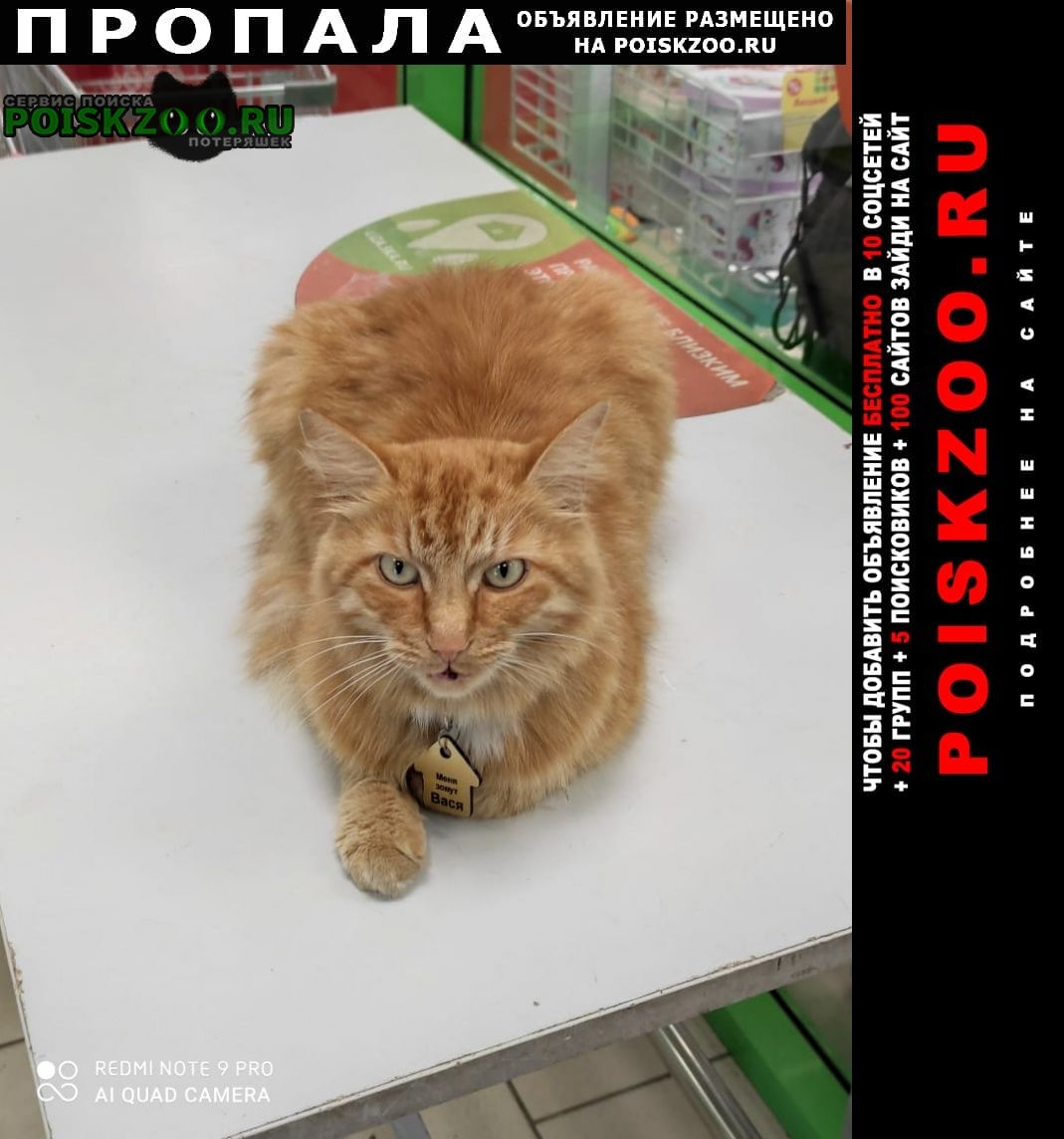 Пропала кошка в начале сентября Домодедово