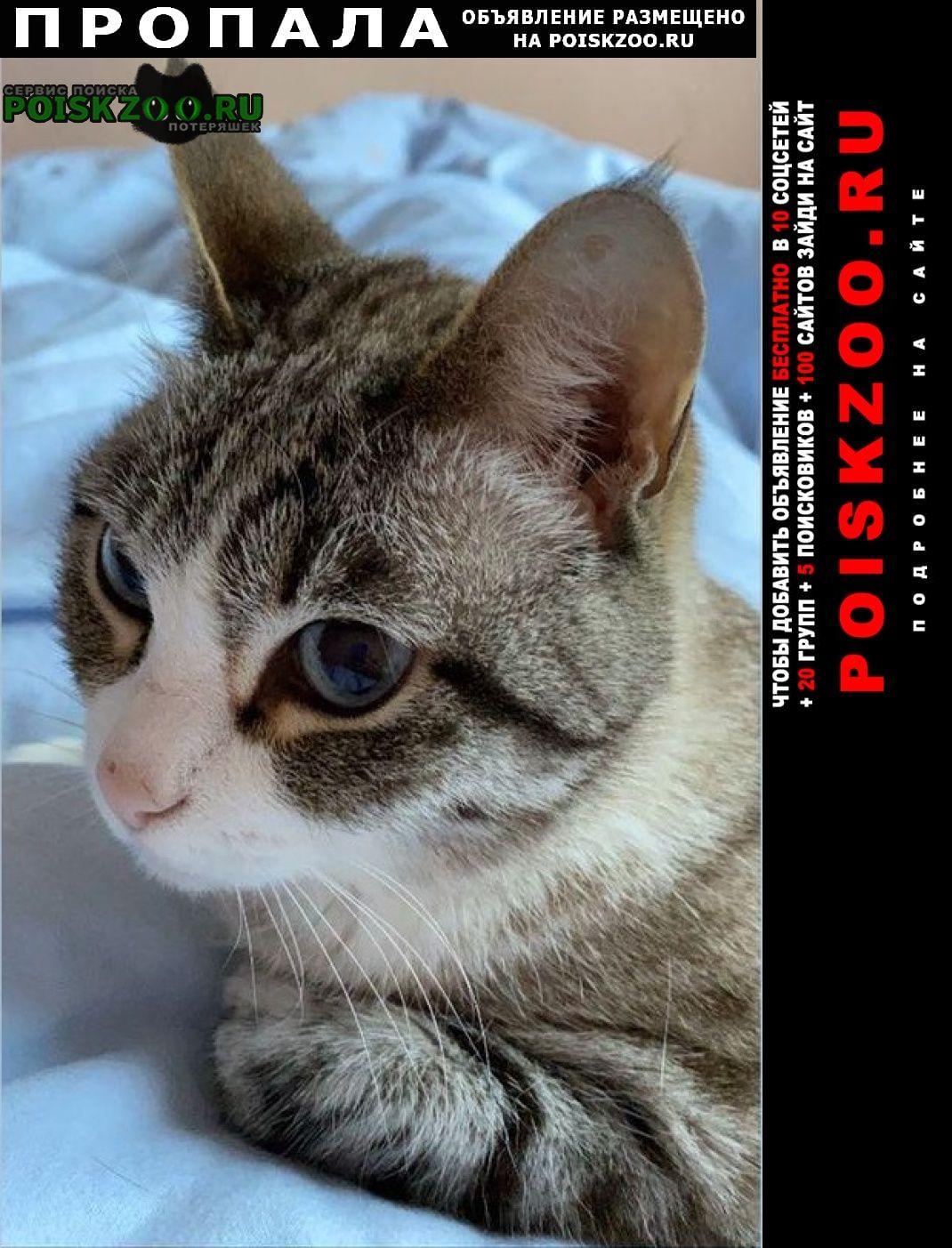 Пропала кошка серая сиамская с голубыми глазами Москва