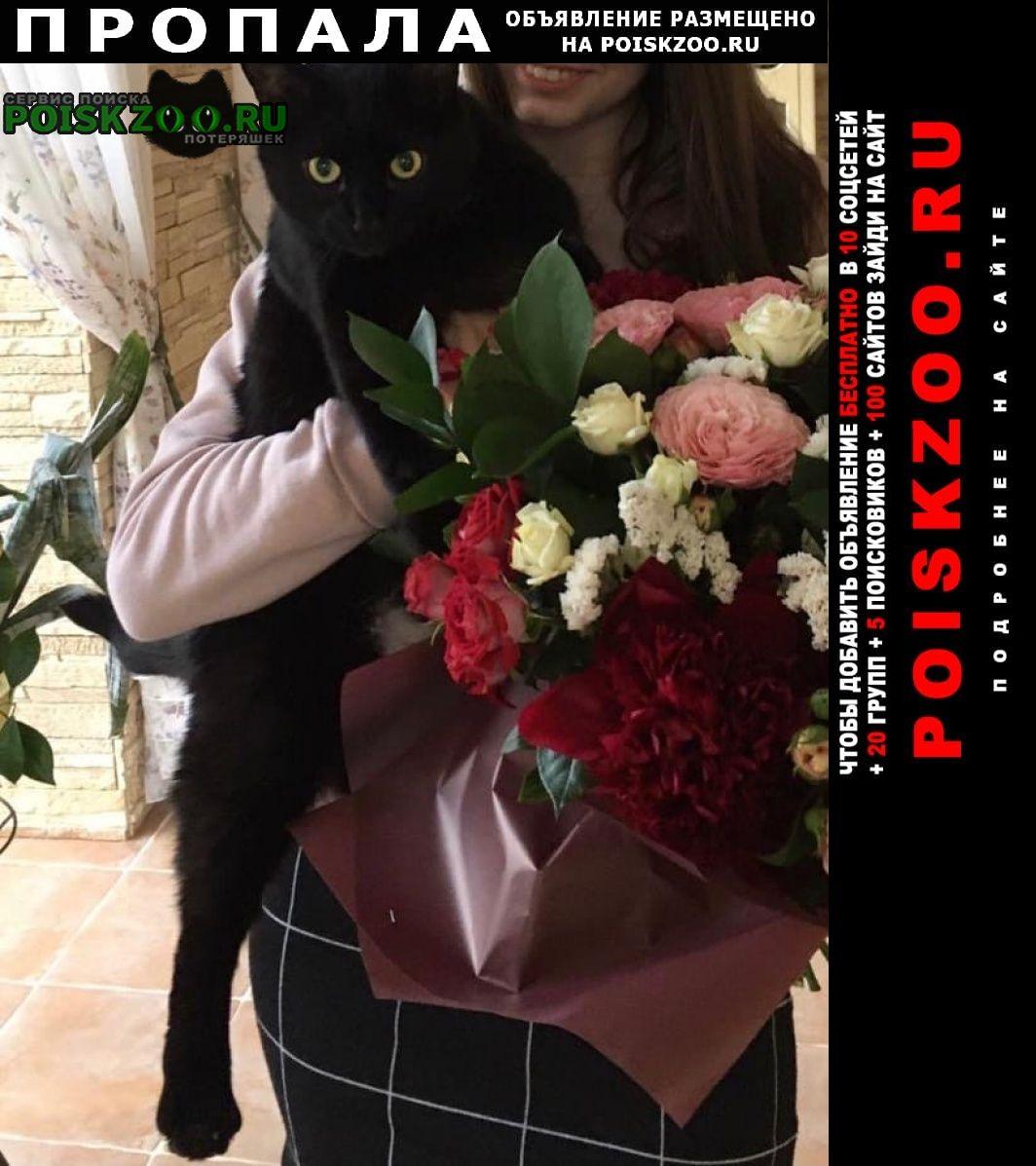 Пропала кошка в мкр. никольско-архангельский Балашиха