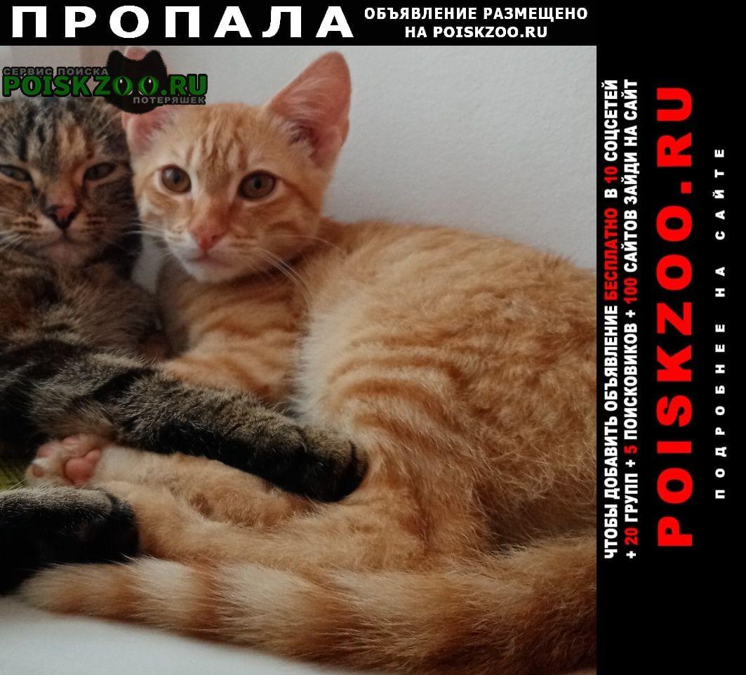 Пропала кошка помогите найти Брянск