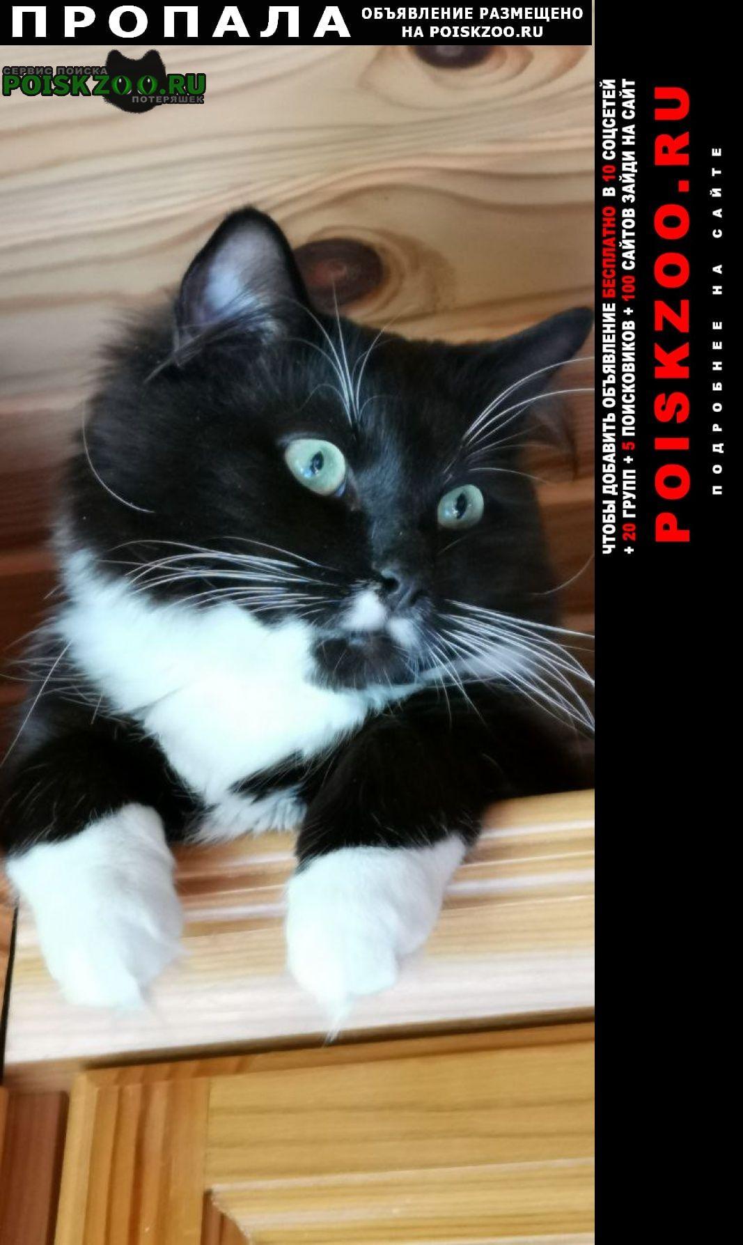 Пропала кошка Псков