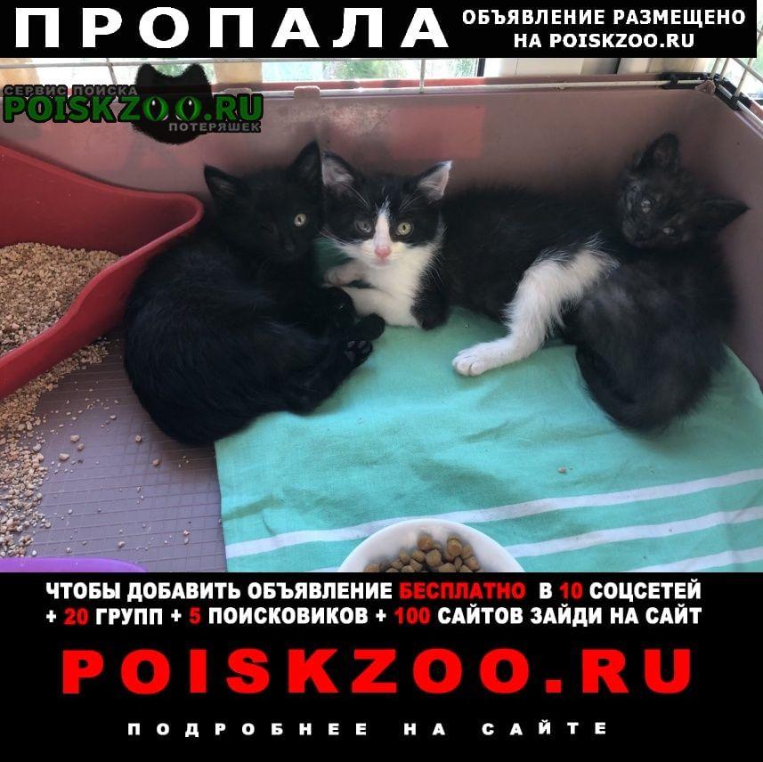 Пропала кошка маленькая чёрная кошечка 1, 5-2 месяца Электросталь