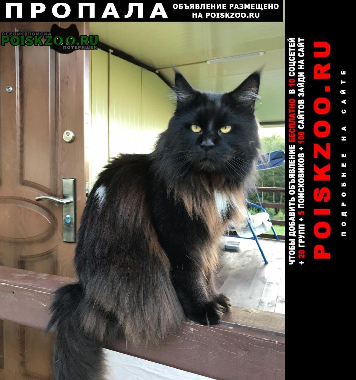 Пропала кошка кот мейн кун Владивосток