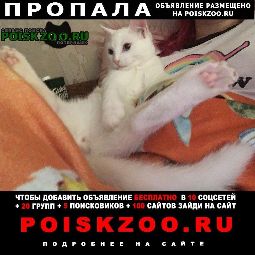 Пропала кошка кот Москва