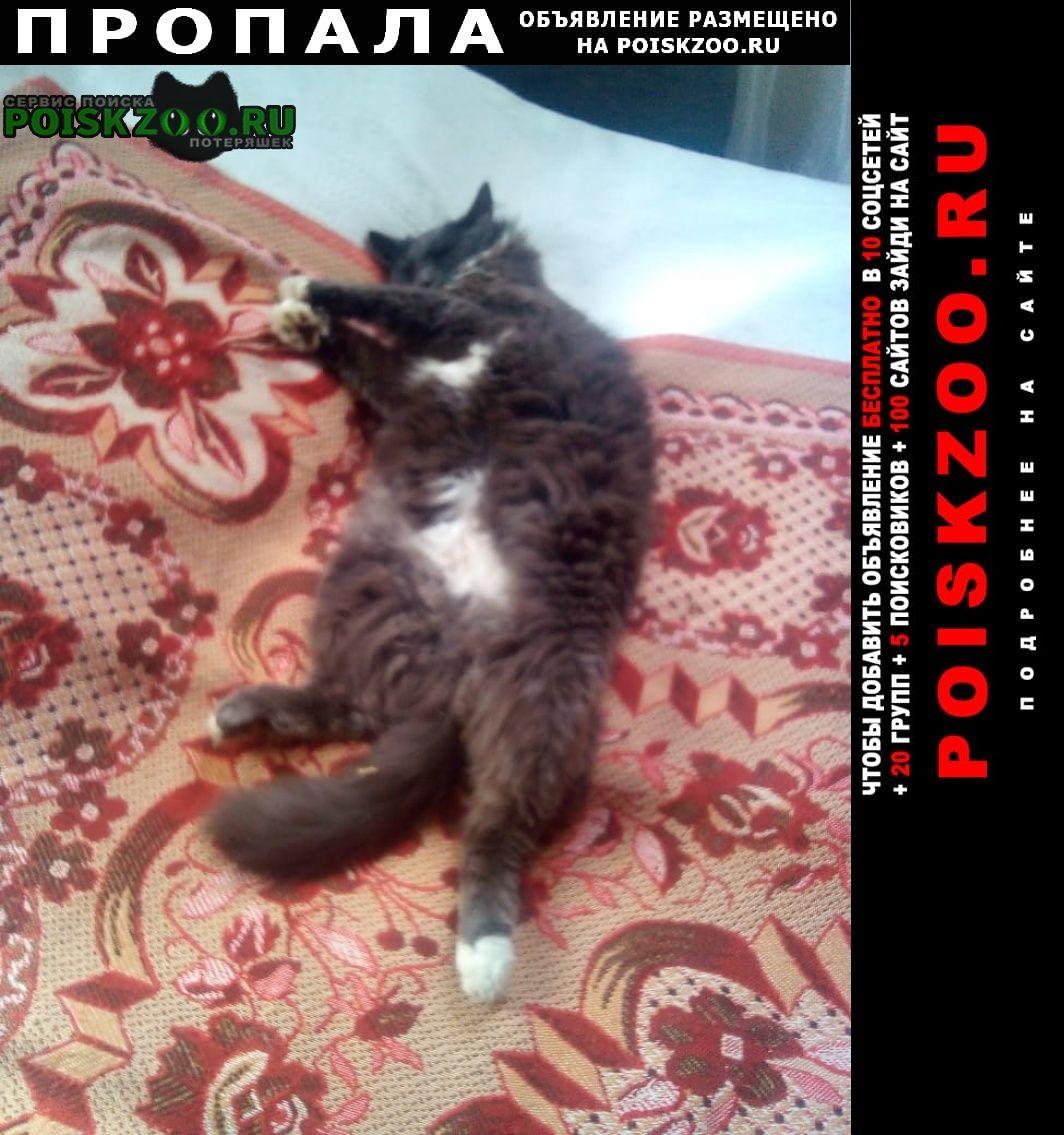 Пропала кошка. Павловский Посад