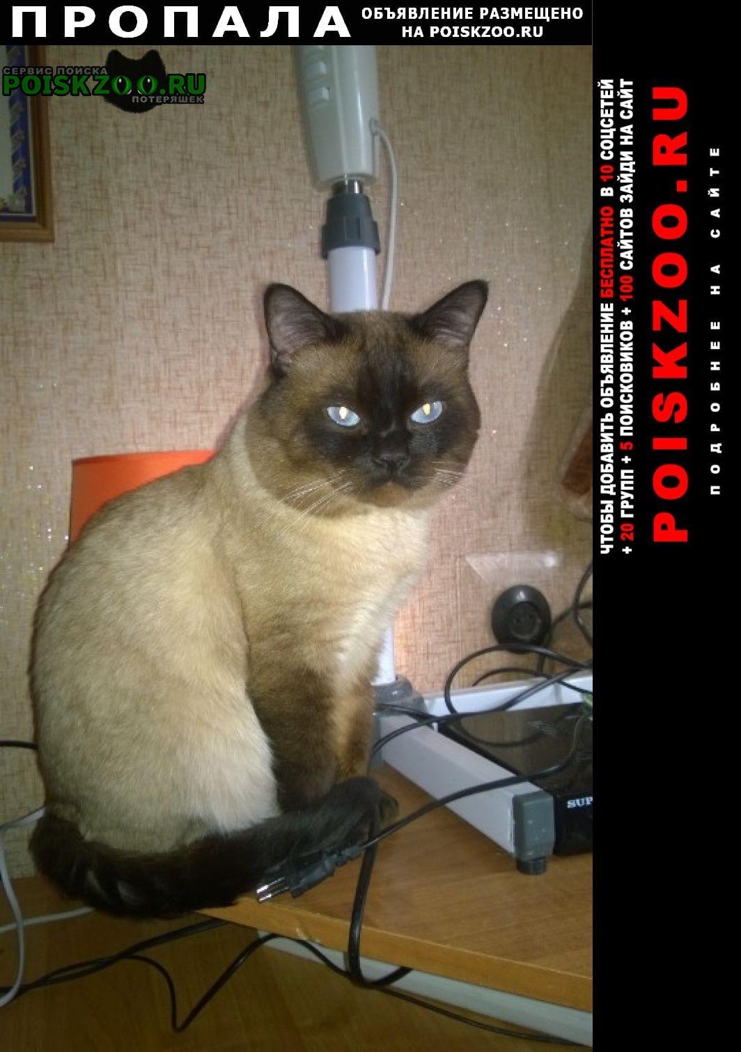Пропала кошка кот Воронеж
