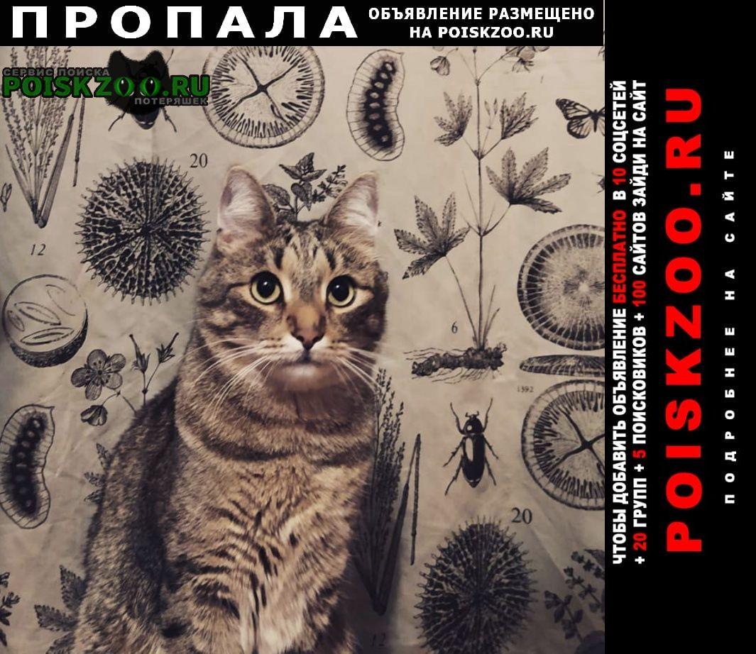 Пропала кошка кот Задонск