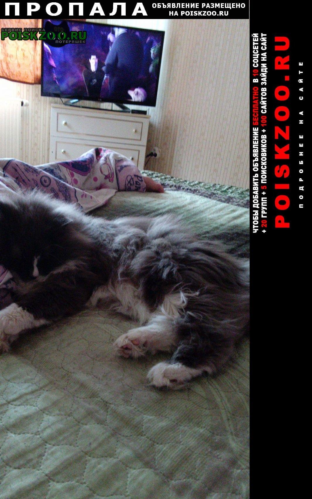 Пропала кошка кот по кличке борис. Ханты-Мансийск