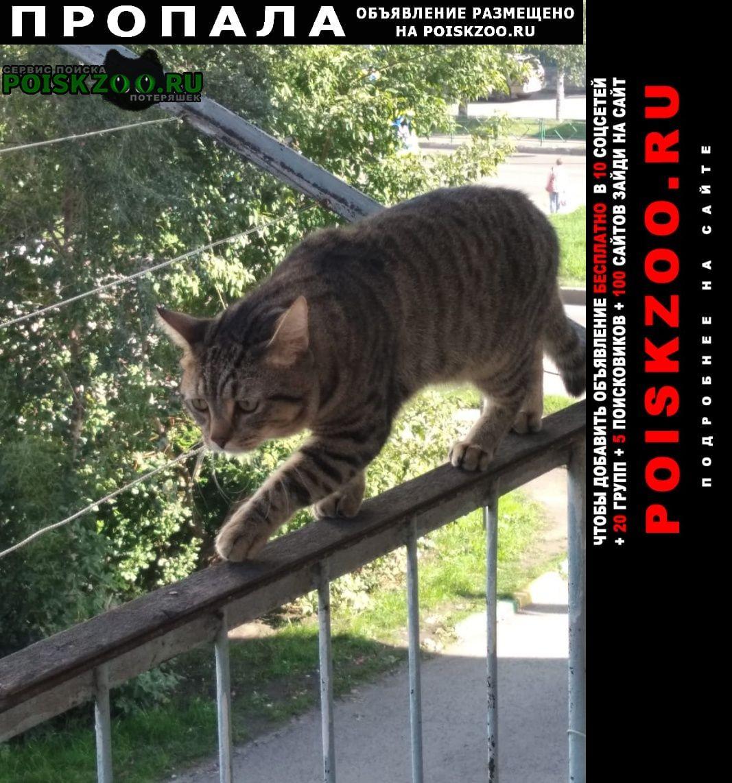 Пропала кошка кот Новокузнецк