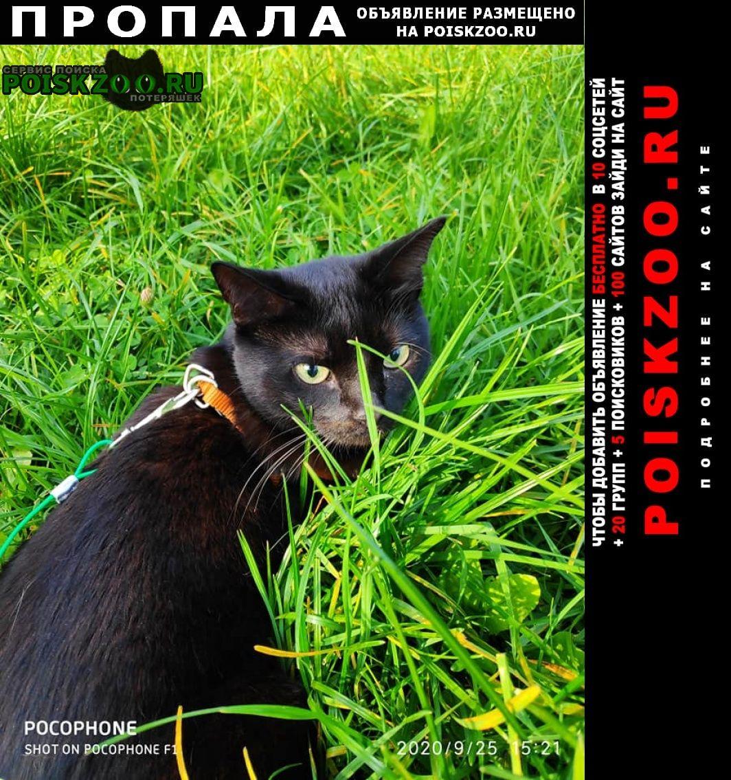 Пропала кошка черная миниатюрная Москва