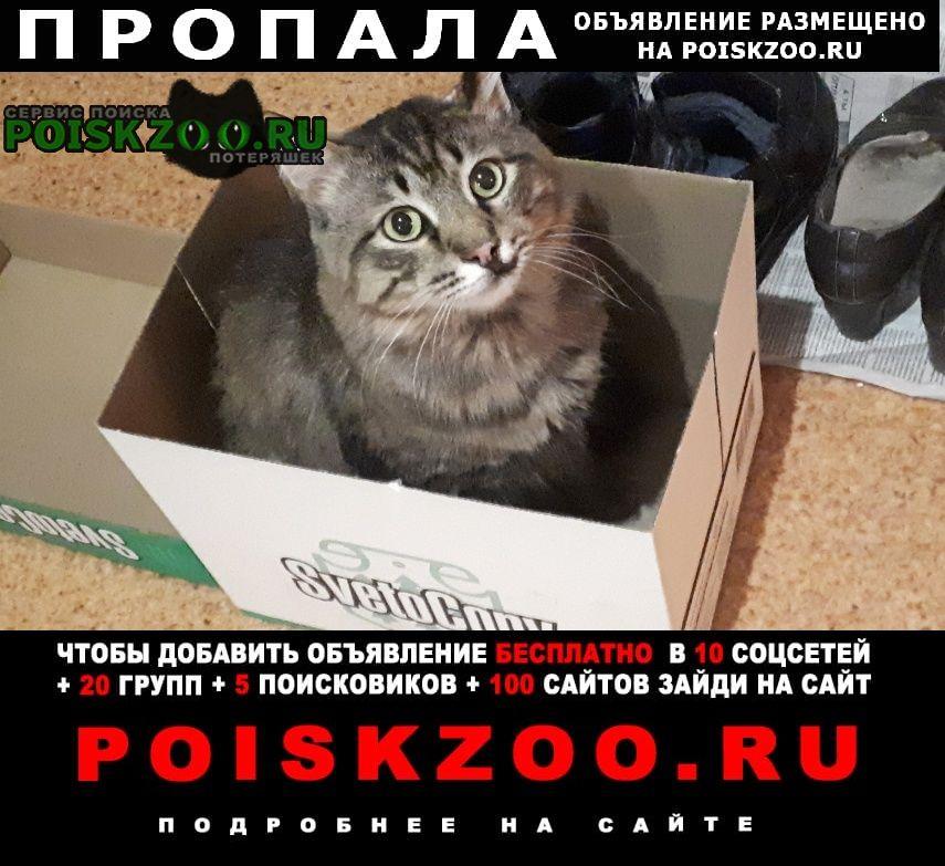 Пропала кошка кот - вознаграждение 3000 руб. Астрахань