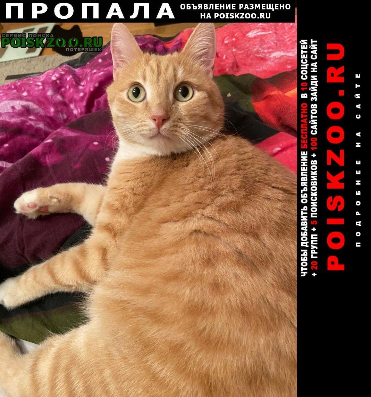 Немчиновка Пропала кошка рыжий кот