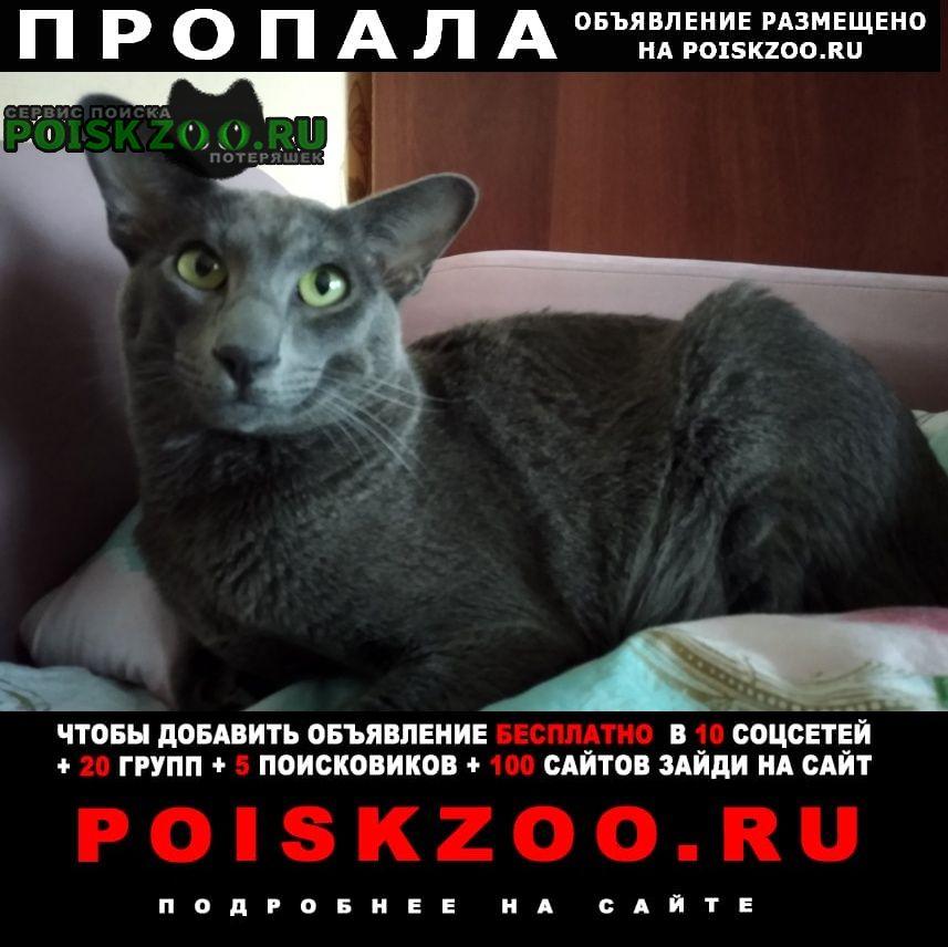 Пропала кошка кот ориентал Иваново