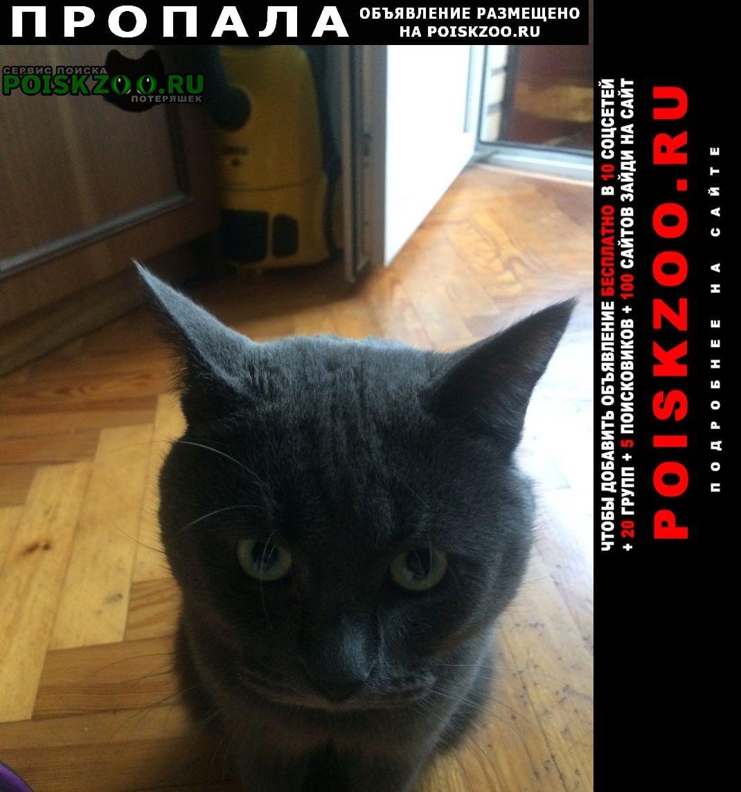Пропала кошка Балашиха