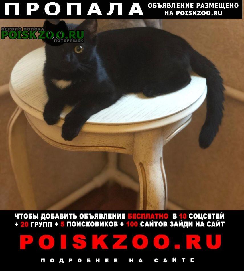 Курск Пропала кошка вишенка  вознаграждение 5000 руб.