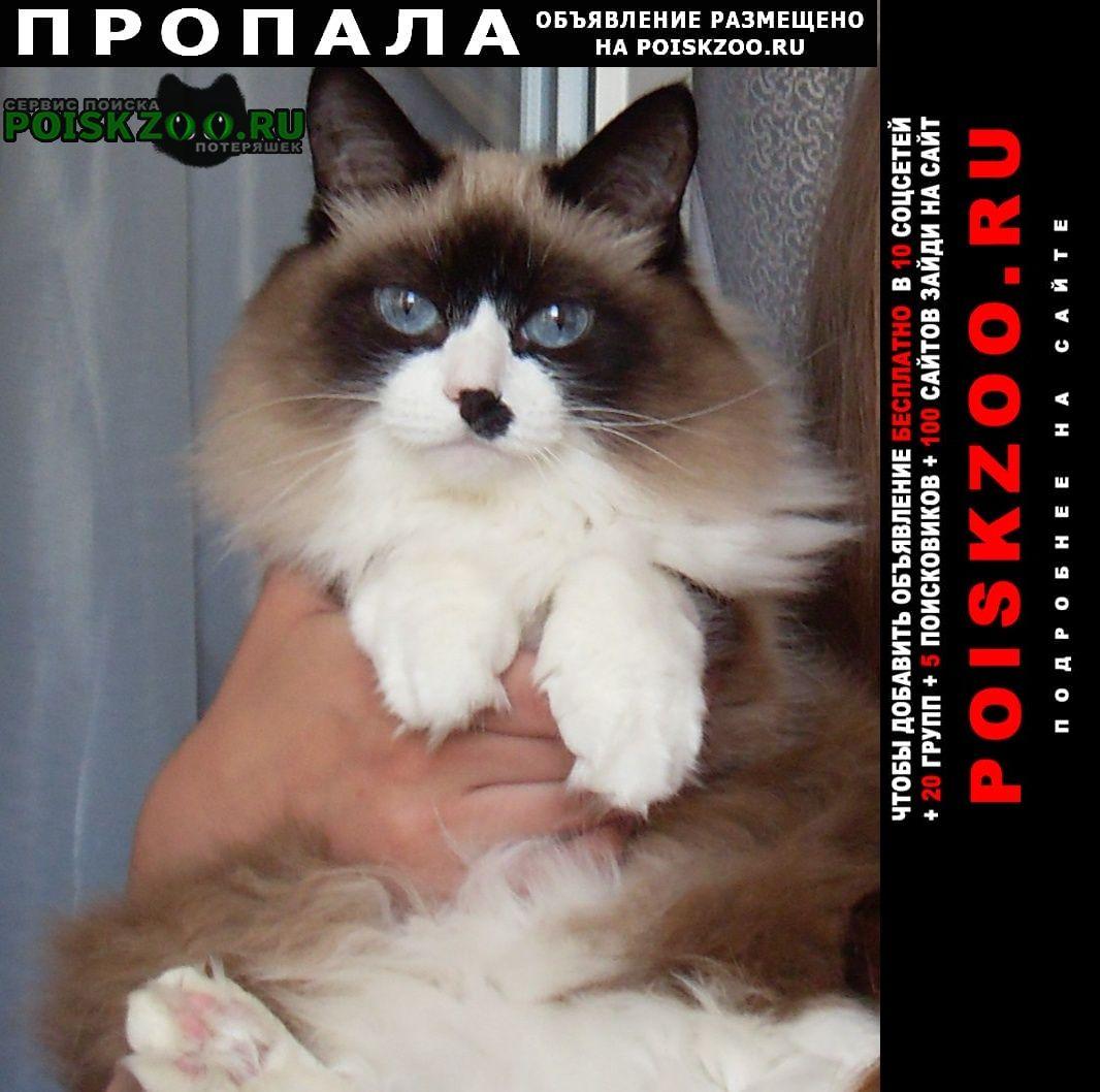 Курган Пропала кошка