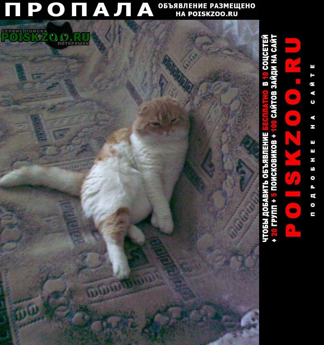 Пропала кошка нашедшим - вознаграждение Кемерово
