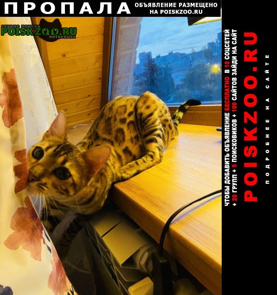 Подольск Пропала кошка