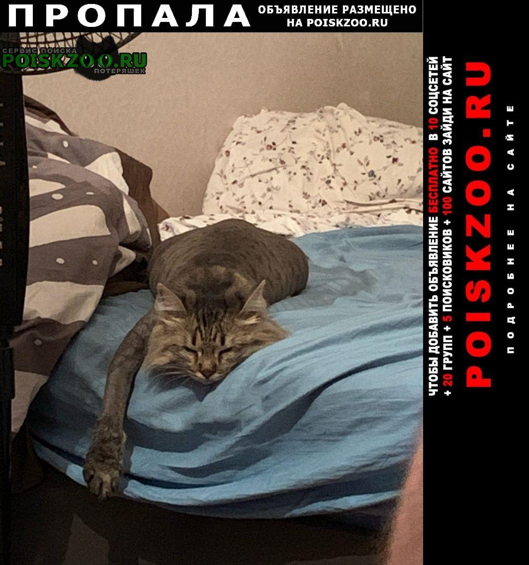 Пропала кошка помогите найти за вознограждение Казань