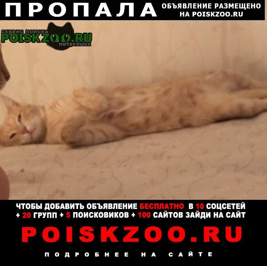 Пропала кошка около детского сада 237, по улице волгина Москва