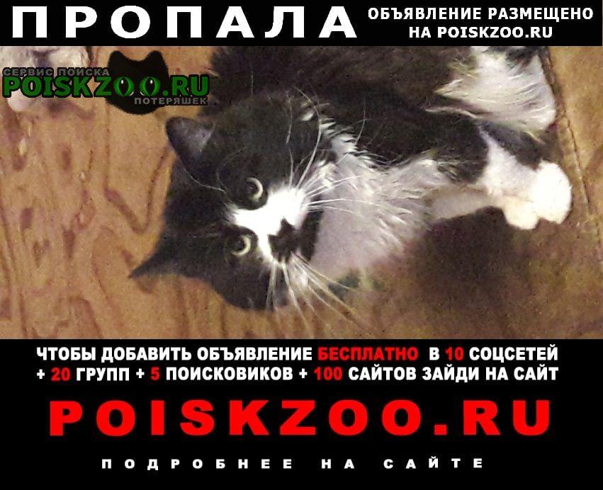 Пропала кошка кот тишка Петропавловск-Камчатский