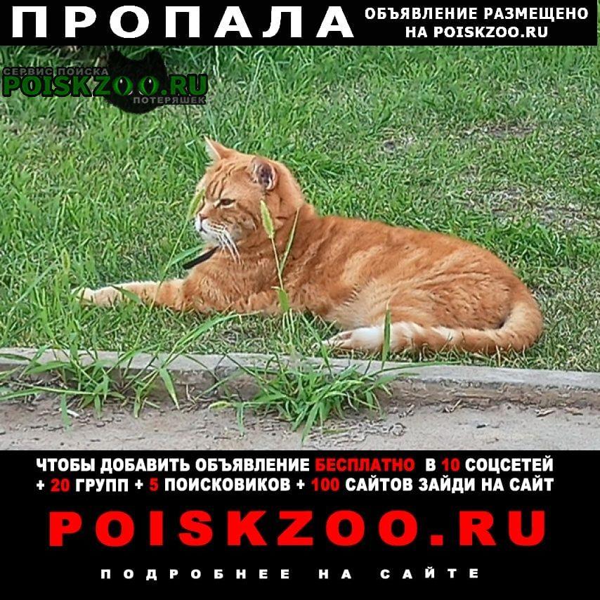 Оренбург Пропала кошка рыжий кот п.ростоши
